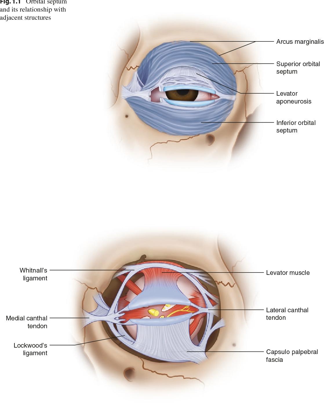 Oculoplastic Surgery Atlas Semantic Scholar