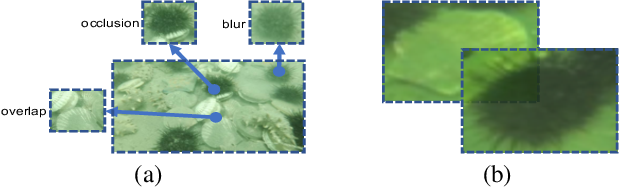 Figure 1 for RoIMix: Proposal-Fusion among Multiple Images for Underwater Object Detection