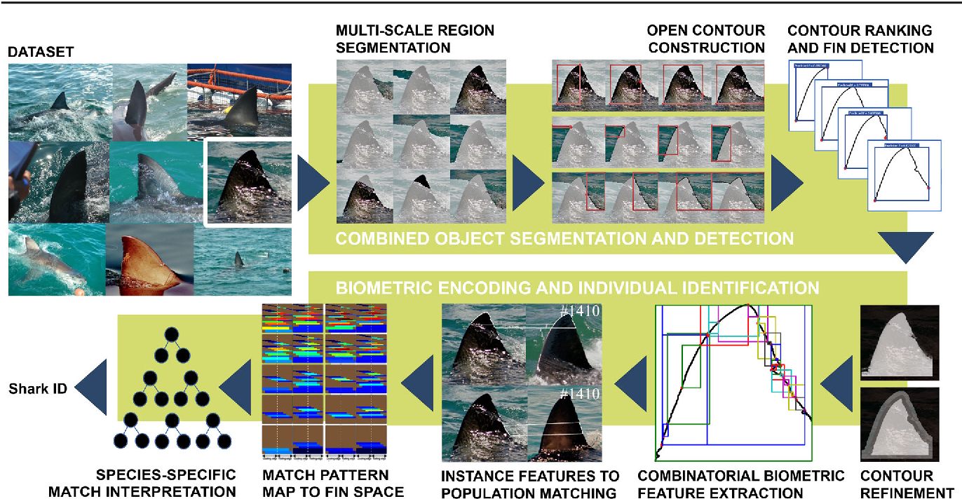 Figure 1 for Automated Visual Fin Identification of Individual Great White Sharks