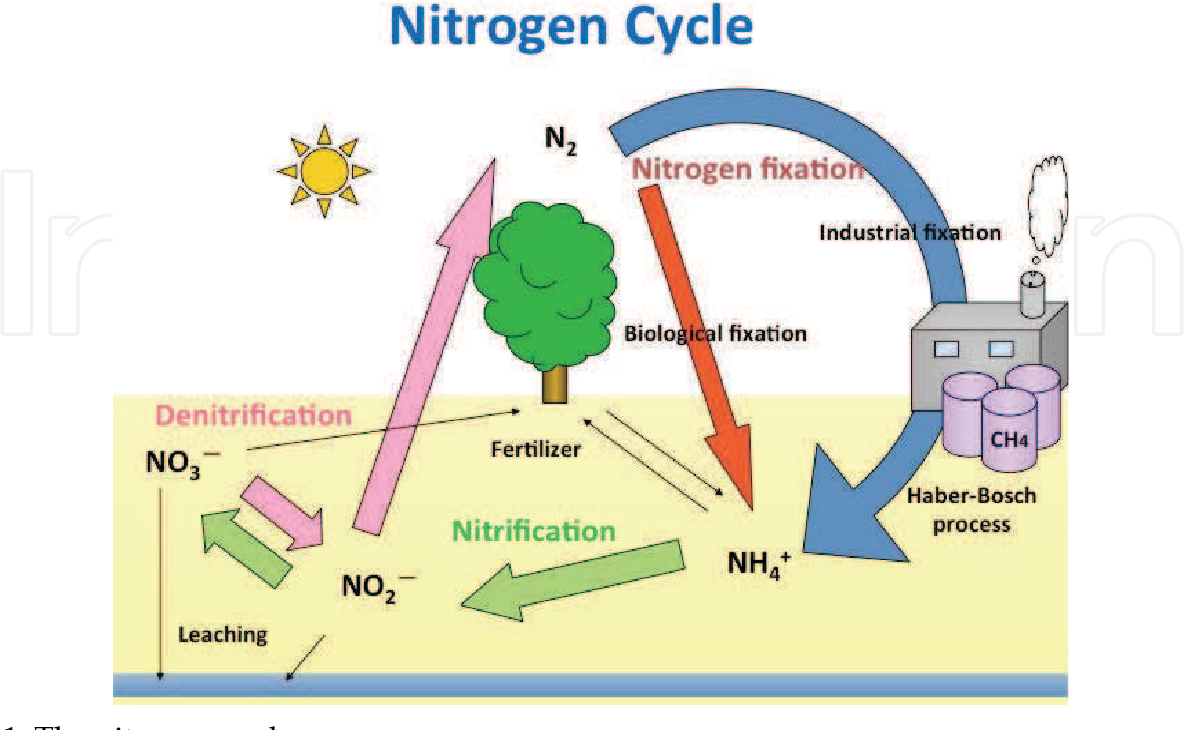 What Are Nitrogen Fixing Bacteria >> Figure 1 From 2 Ammonia Accumulation Of Novel Nitrogen Fixing