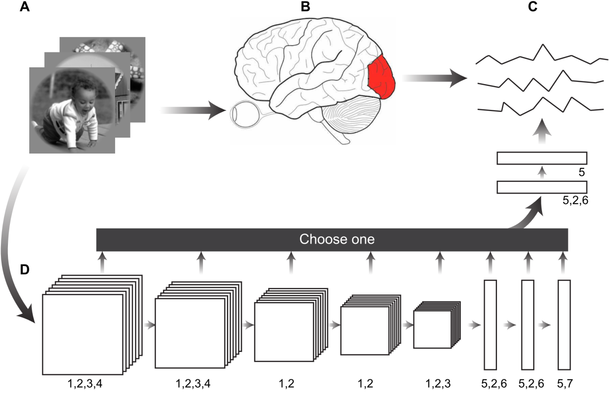Figure 2 for A visual encoding model based on deep neural networks and transfer learning