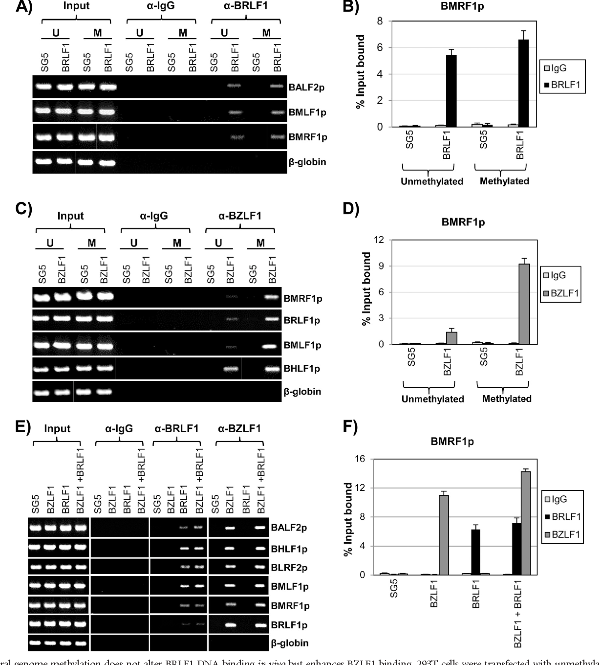 Figure 6 from Expression and Viral Replication To Activate