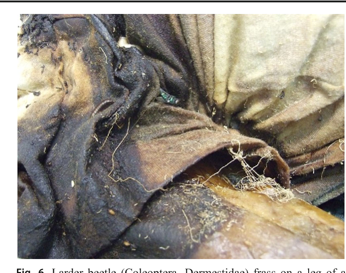 Figure 6 from Crime scene and body alterations caused by arthropods