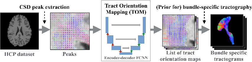 Figure 2 for Tract orientation mapping for bundle-specific tractography