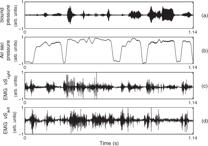 Figure 3 from Physiologically driven avian vocal synthesizer