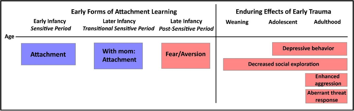 Figure 2 from Early life adversity during the infant