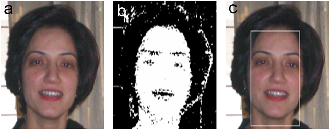 Fig. 5. (a) Input image, (b) skin pixels, and (c) detected face.