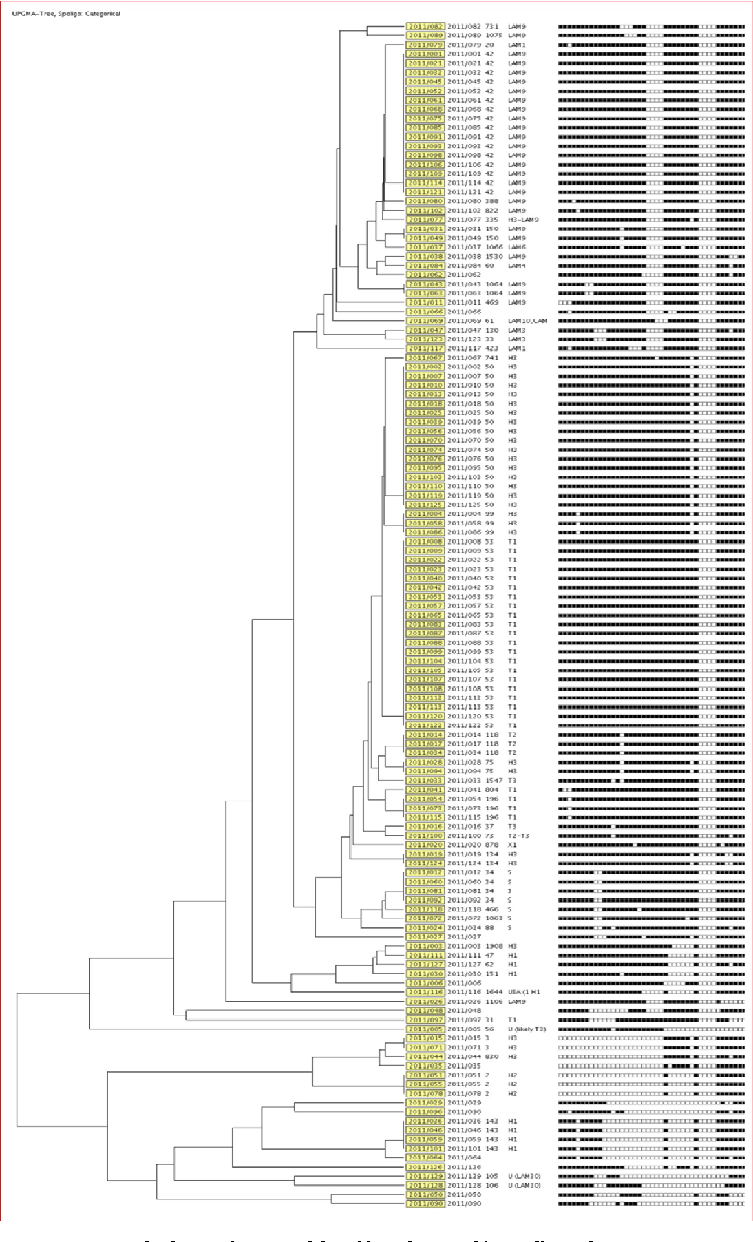 Fig. 2 – Dendrogram of the 129 strains typed by spoligotyping.