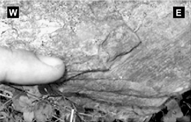 Fig. 3. Extensional lineation in epidote-actinolite schists.