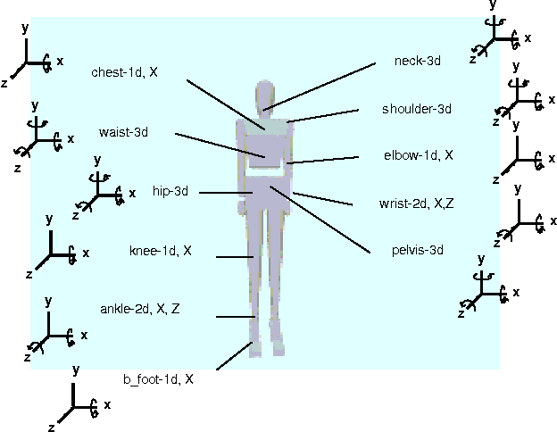 Figure 1: The controlled degrees of freedom of the human model. There are 18 body segments and a total of 36 controlled degrees of freedom.