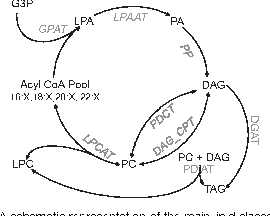 Figure 2 From Metabolic Engineering Of The Omega 3 Long Chain