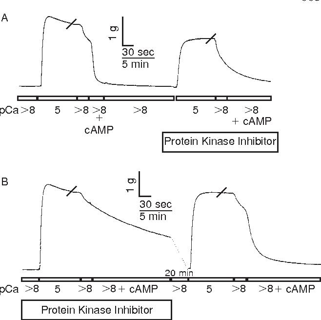 Figure 7 from Phosphorylation of a high molecular weight (∼600 kDa