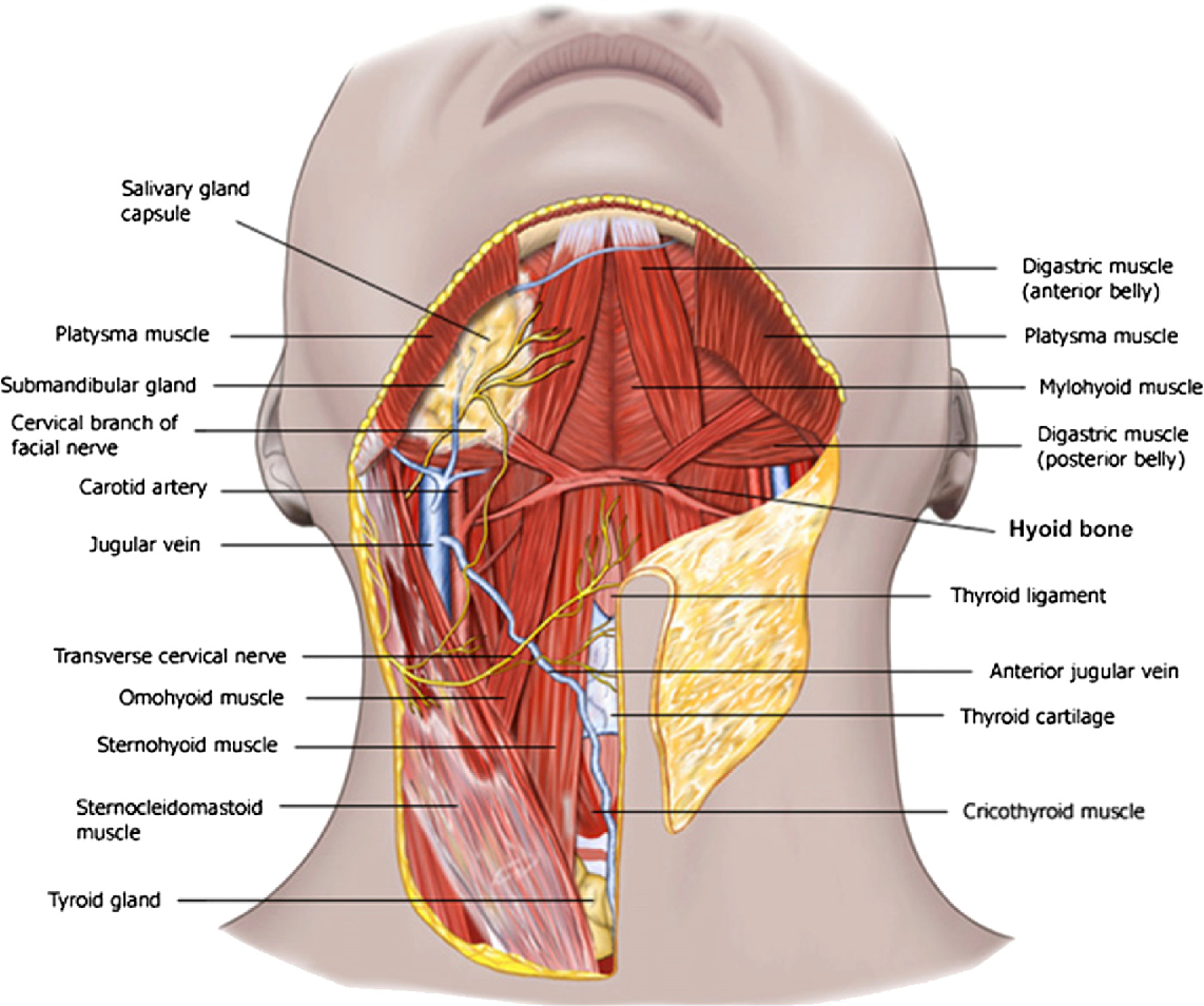 Figure 5 from Anatomy and physiology of the aging neck. - Semantic ...