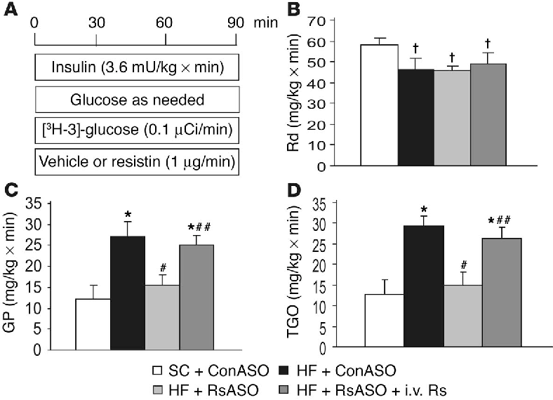 Figure 2 Circulating resistin is required for diet-induced hepatic insulin resistance. (A) Schematic representation of the insulin-clamp procedure. The infusion studies lasted a total of 90 minutes. Mice received a primed-constant infusion of HPLC-purified [3H-3]-glucose (0.1 µCi/min) and insulin (3.6 mU/kg/min) at t = 0 minutes for the duration of the study. A variable infusion of a 10% glucose solution was started and periodically adjusted (glucose as needed) to maintain the plasma glucose concentration at approximately 8 mM for the rest of the study. (B) Rates of glucose uptake (Rd) during the insulin-clamp studies. (C) Rates of endogenous glucose production (GP) during the insulinclamp studies. (D) Effect of resistin ASO and resistin infusion on total glucose output (in vivo flux-through G6Pase). †P < 0.05 vs. SC group; *P < 0.01 vs. SC group; #P < 0.01 vs. HF + ConASO; ##P < 0.01 vs. HF + RsASO.
