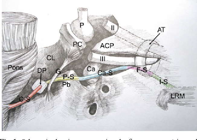 Microsurgical anatomy of the abducens nerve - Semantic Scholar