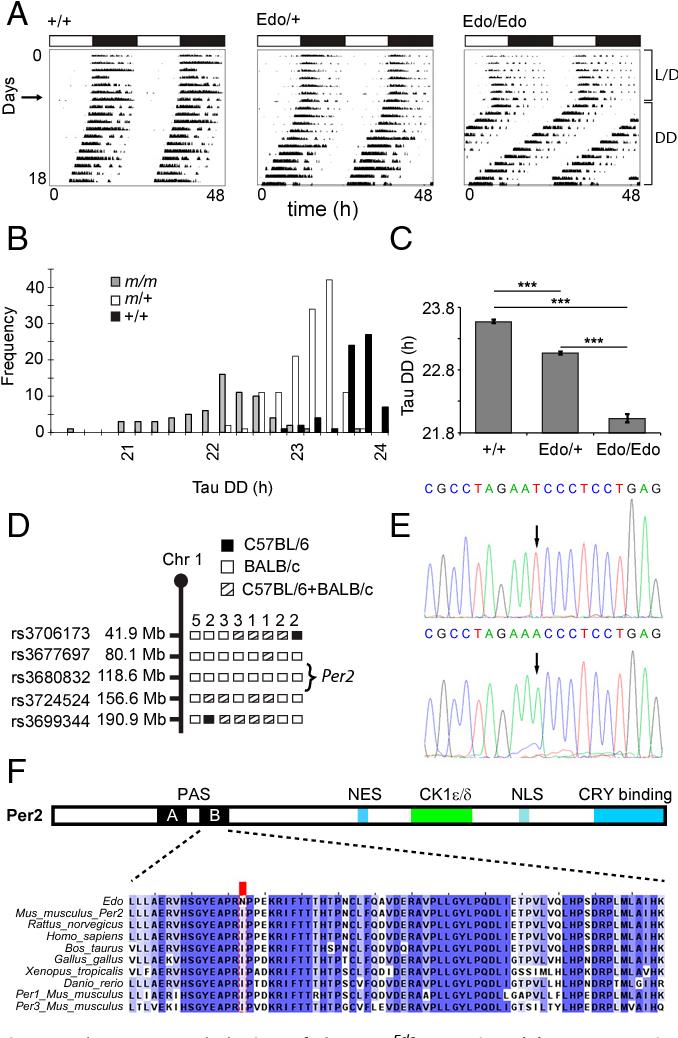 figure 1  sc 1 st  Semantic Scholar & Figure 1 from Early doors ( Edo ) mutant mouse reveals the ...