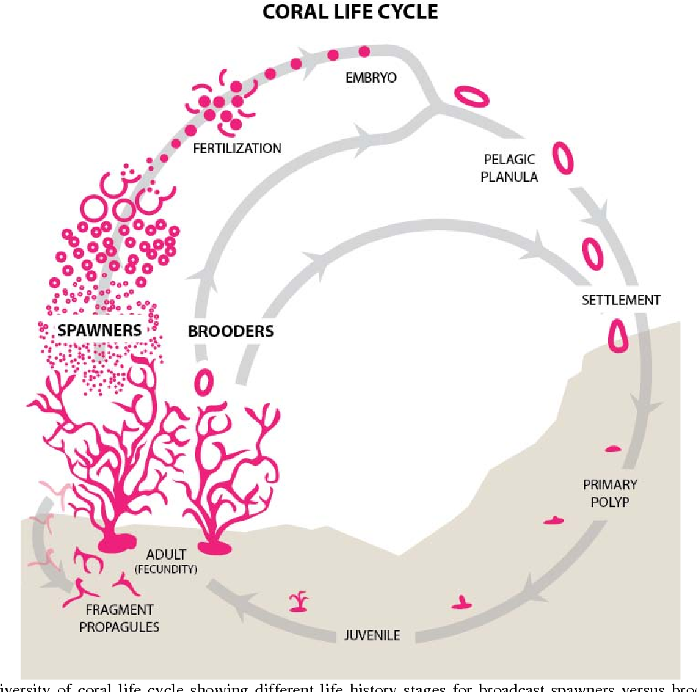Figure 2.1 from 2. General Background on Corals and Coral Reefs ...