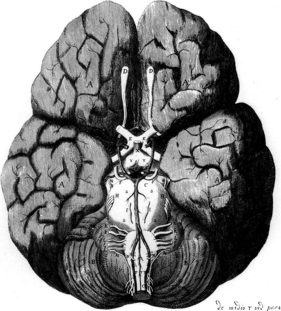 Figure 3 from The discovery of motor cortex and its background ...