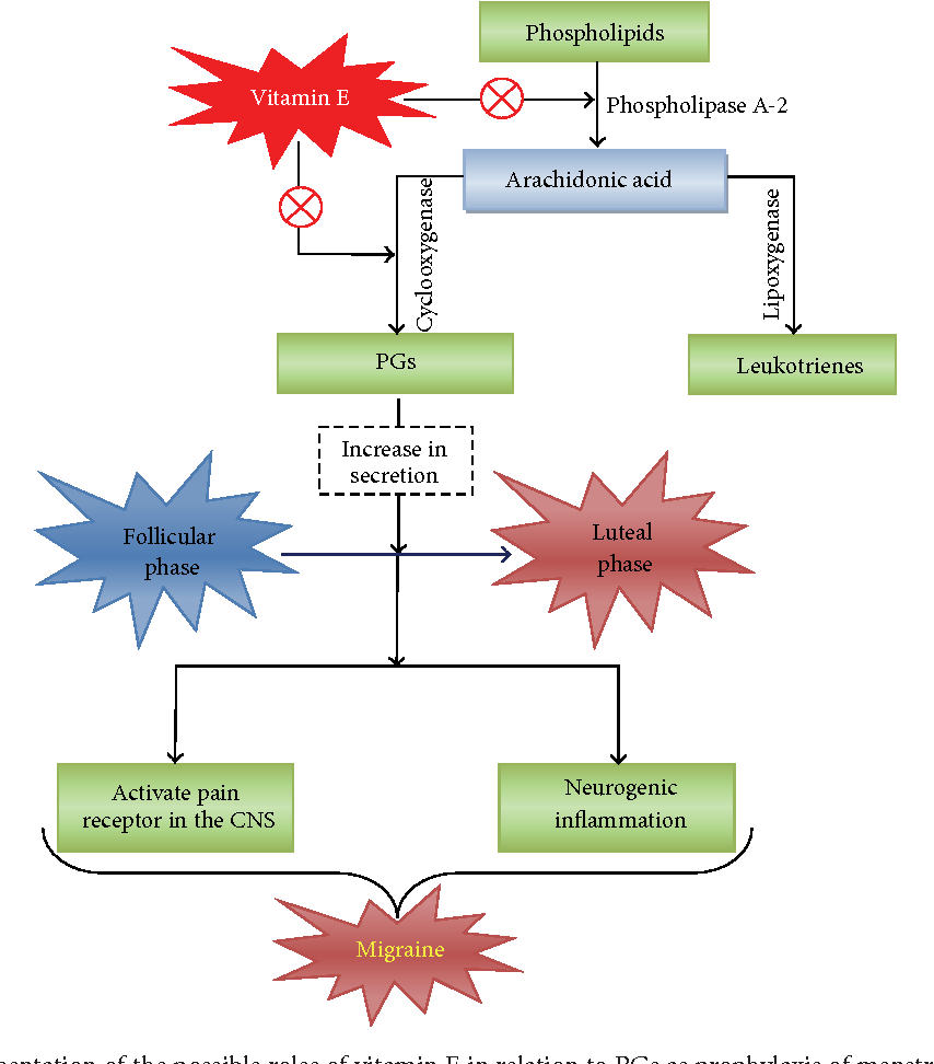 Figure 3 from vitamin supplementation as possible prophylactic figure 3 schematic representation of the possible roles of vitamin e in relation to pgs ccuart Image collections