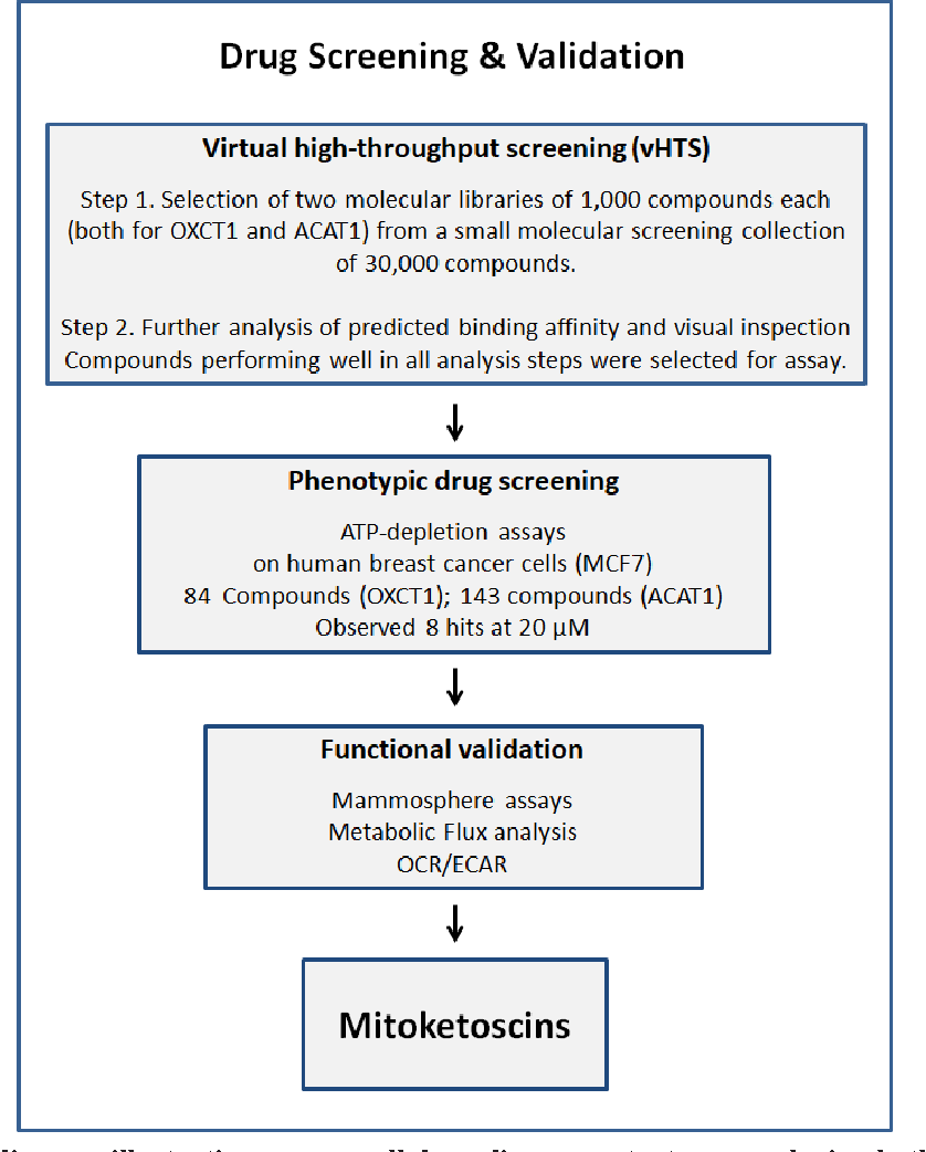 Mitoketoscins: Novel mitochondrial inhibitors for targeting ketone ...