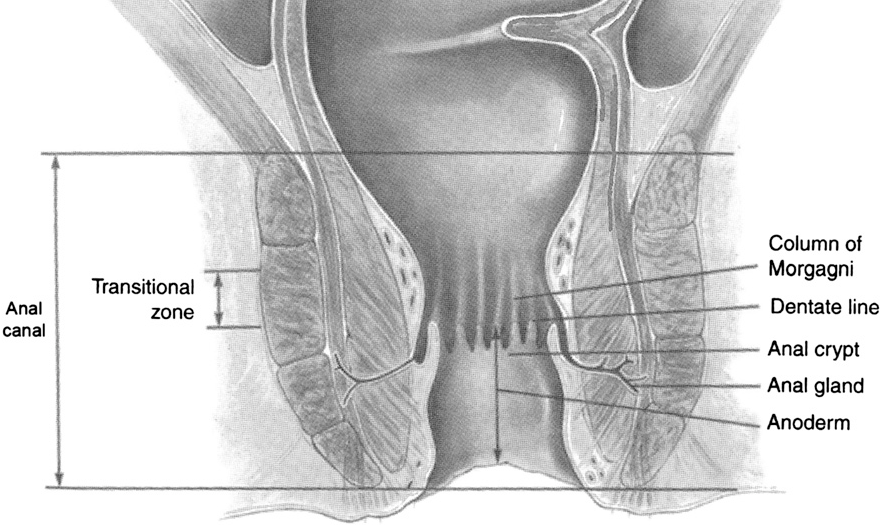 Figure 3 From Anorectal Anatomy And Physiology Semantic Scholar