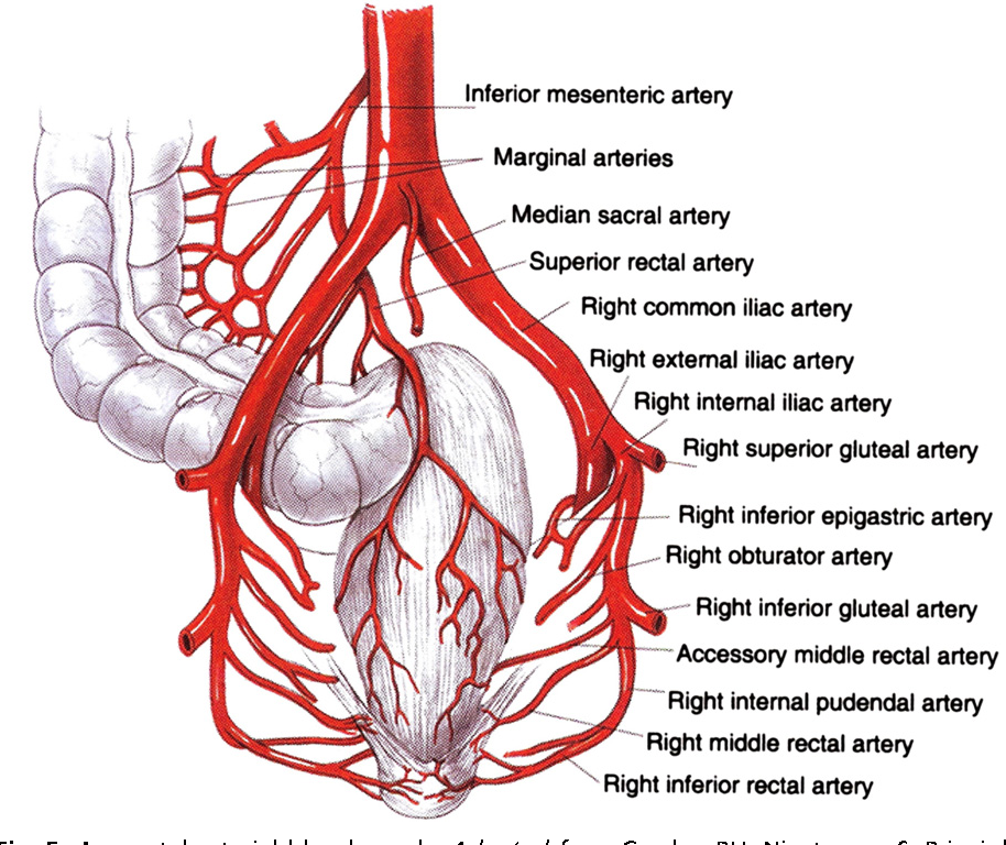 Figure 5 from Anorectal anatomy and physiology. - Semantic Scholar