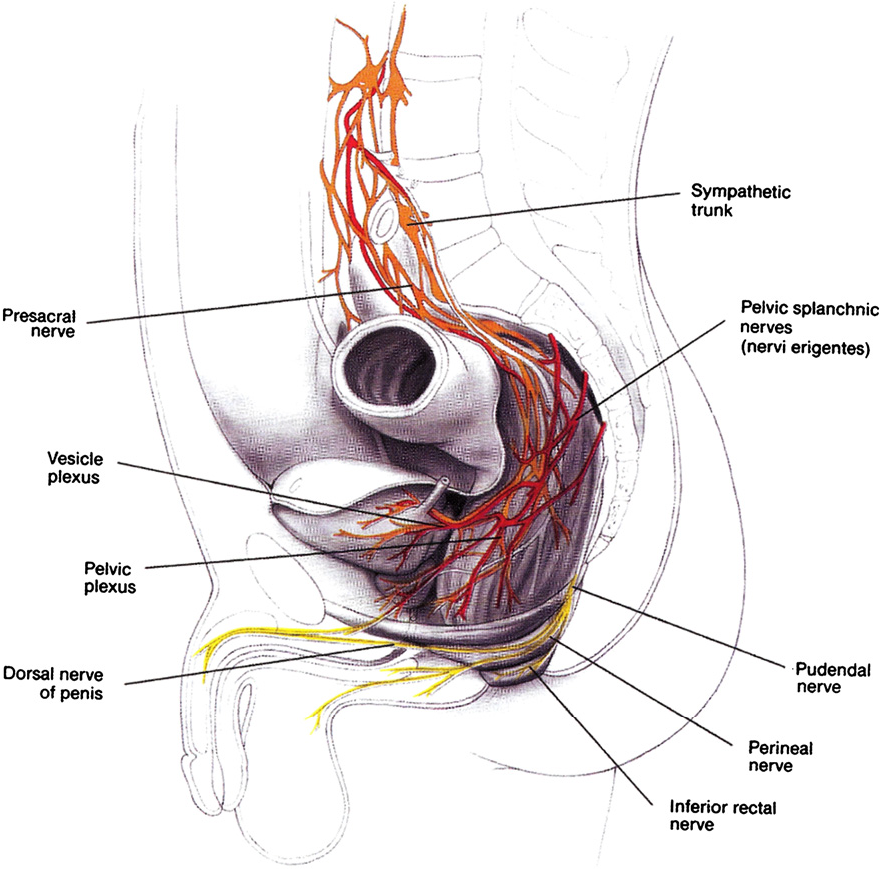 Figure 7 from Anorectal anatomy and physiology. - Semantic Scholar