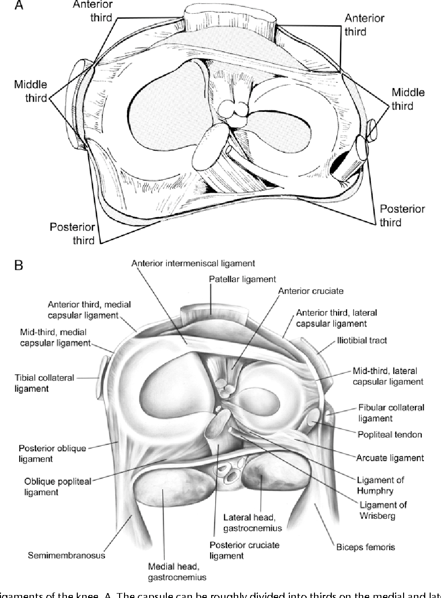 Figure 1 from Normal anatomy and biomechanics of the knee ...