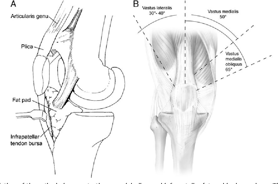 Figure 3 from Normal anatomy and biomechanics of the knee ...