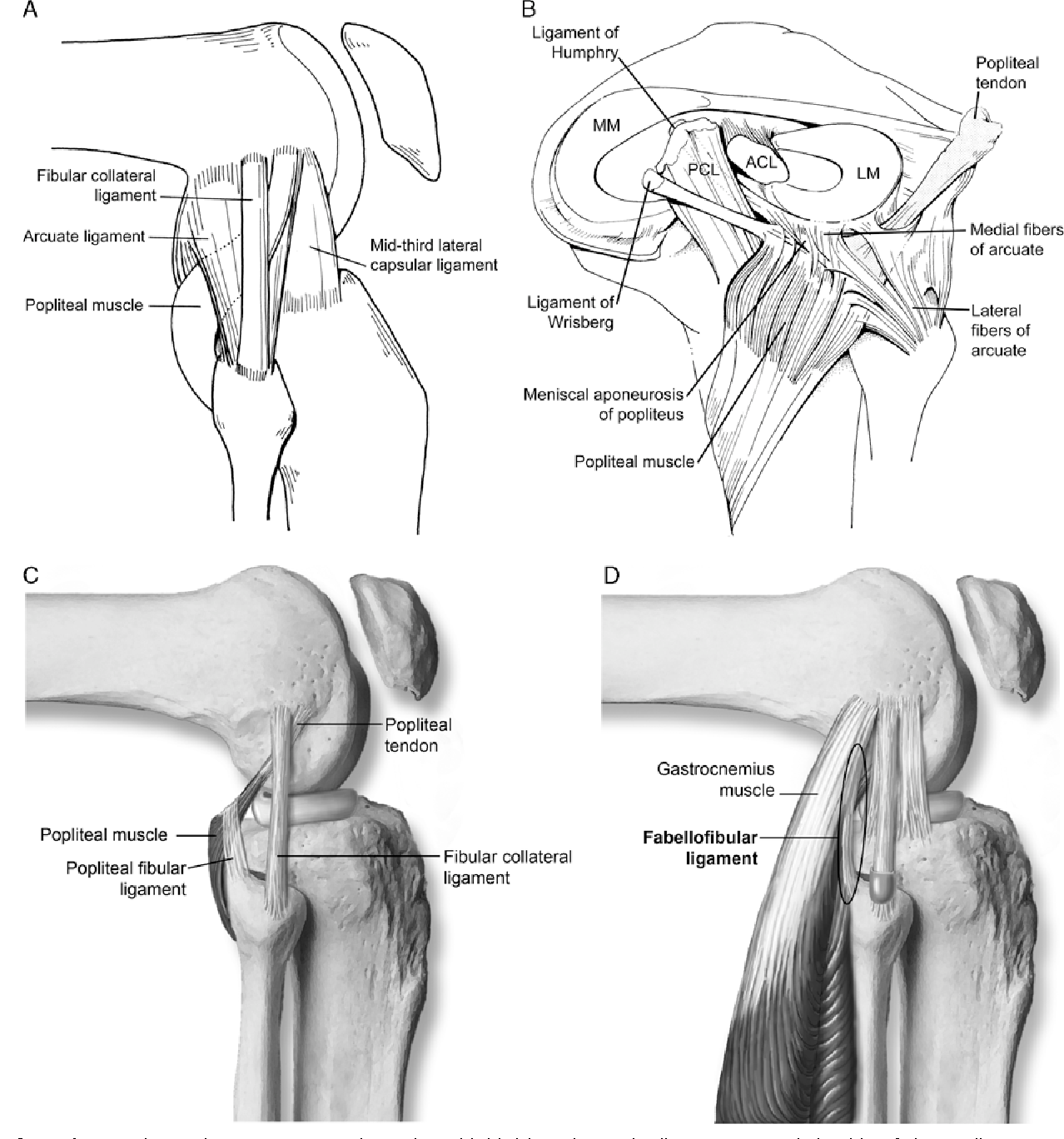 Figure 9 from Normal anatomy and biomechanics of the knee ...