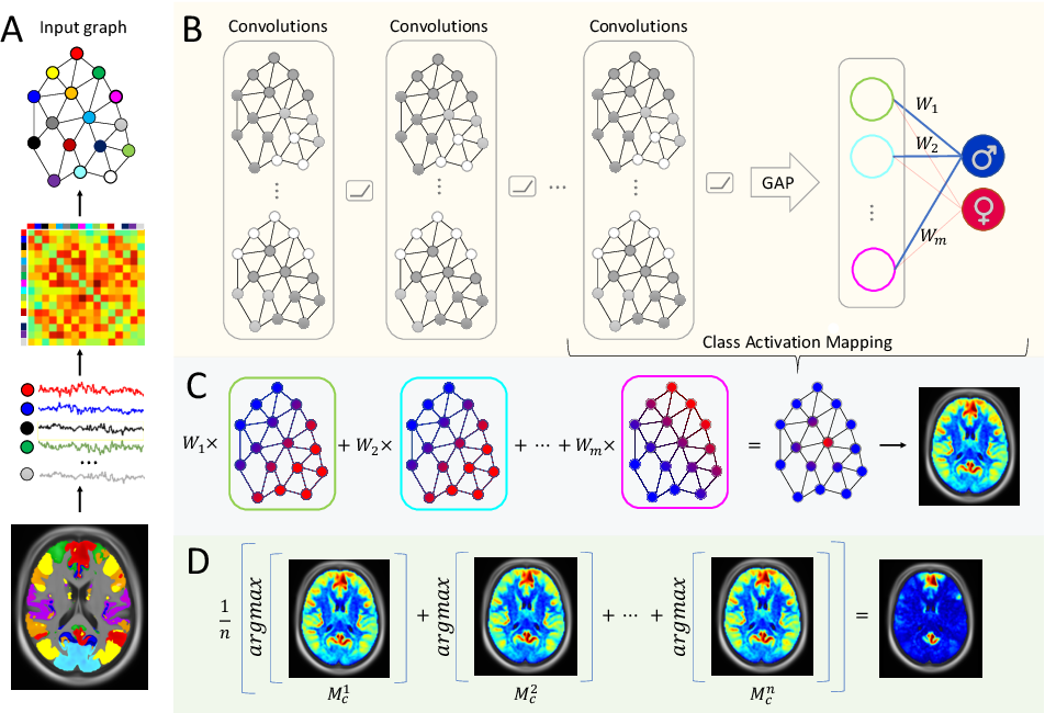 Figure 1 for Graph Saliency Maps through Spectral Convolutional Networks: Application to Sex Classification with Brain Connectivity