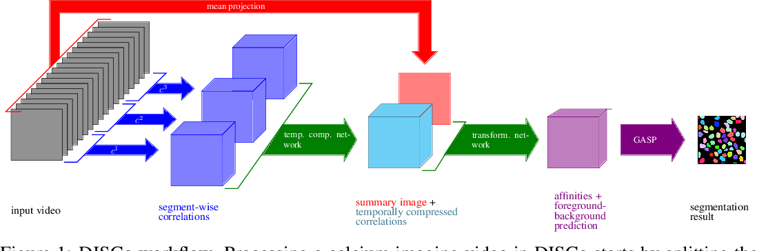 Figure 1 for DISCo for the CIA: Deep learning, Instance Segmentation, and Correlations for Calcium Imaging Analysis