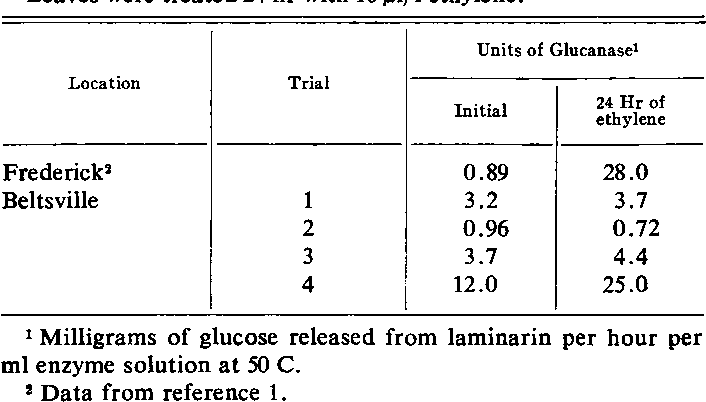 Table I. Effect ofEthylene on Levels of Glucanase in Bean Leaves from Plants Grown in Frederick and Beltsville, Maryland