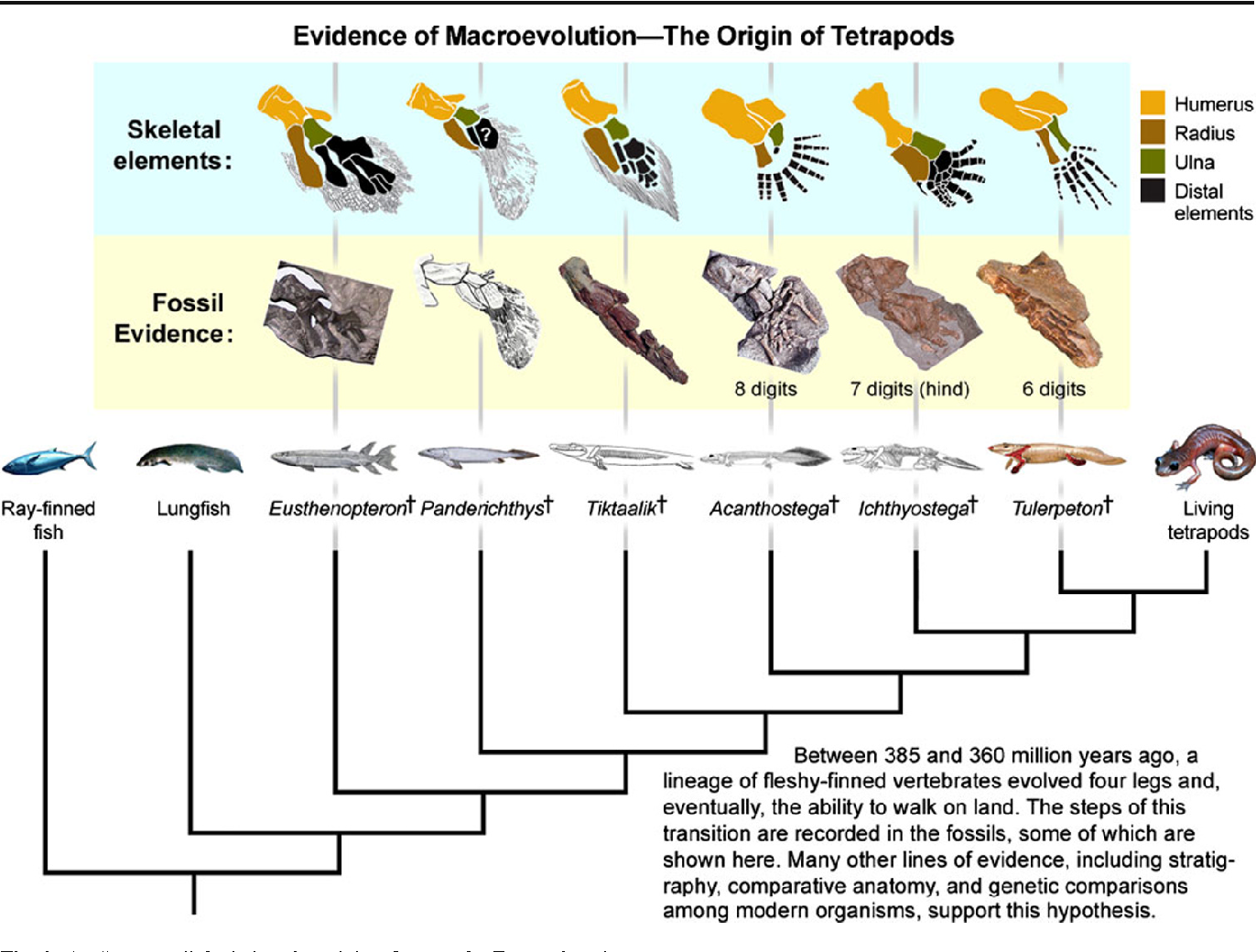 Figure 2 from How to Win the Evolution War: Teach Macroevolution ...