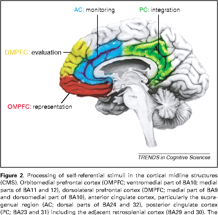 Figure 2 from Cortical midline structures and the self. - Semantic ...