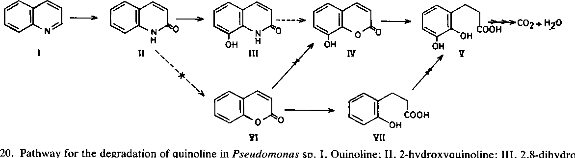 Pathway For The Degradation Of Quinoline In Pseudomonas Sp I