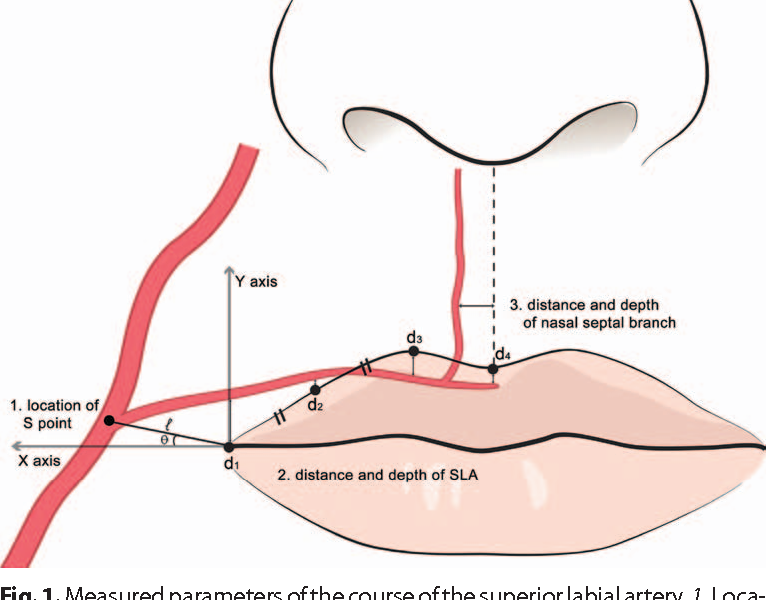 Lip Anatomy Diagram Injections - Search For Wiring Diagrams •