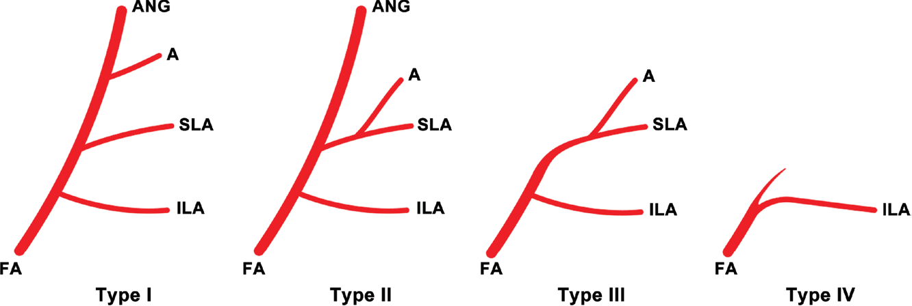 Topographic anatomy of the superior labial artery for dermal filler ...