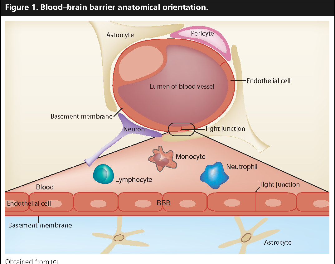 Figure 1 from Alzheimer\'s disease and the Blood-Brain Barrier: Past ...
