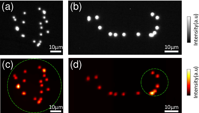 Figure 2 for Large field-of-view non-invasive imaging through scattering layers using fluctuating random illumination
