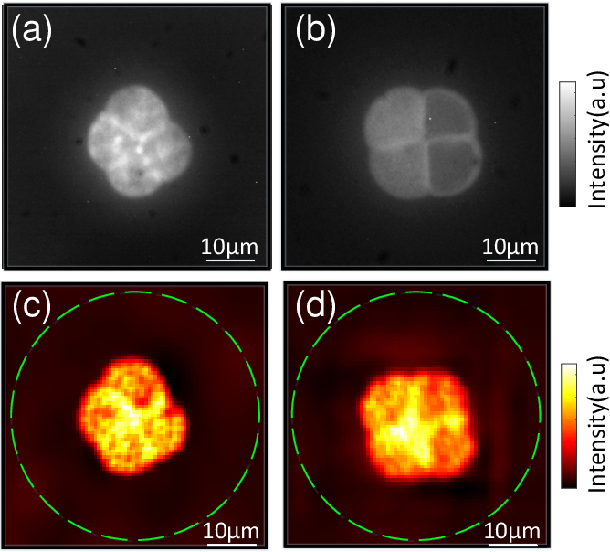 Figure 3 for Large field-of-view non-invasive imaging through scattering layers using fluctuating random illumination