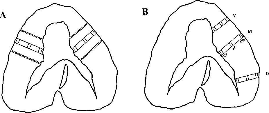 Figure 1 from Muscle fiber architecture of the dog diaphragm ...
