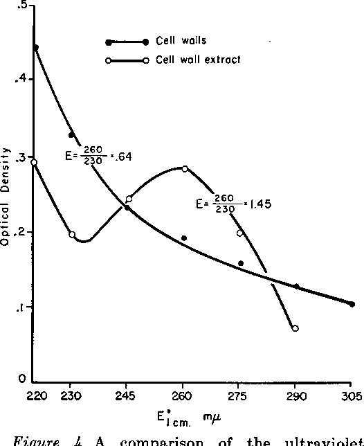 Figure 4. A comparison of the ultraviolet absorption spectrum of a suspension and an extract of cell walls.