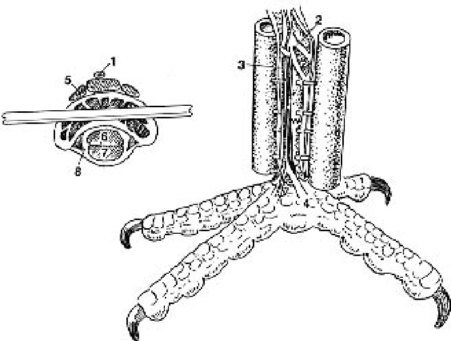 Figure 42 18 From Orthopedic Surgical Techniques