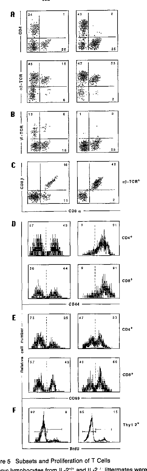 Figure 5 Subsets and Proliferation of T Cells Colonic lymphocytes from IL-2 ÷~+ and IL-2-'- littermates were isolated and analyzed by flow cytometry as described in Experimental Procedures. (A) Representative scatter plots of colonic lymphocytes stained for aCD8/CD4, and aCD8/cz~TCR. (B) Expressuon of ~CD8 and y6TCR on colonic lymphocytes. (C) Proportions of subsets defined by aCD8 and ~CD8 on ctJ~,TCR + cells. (D) Histograms show the expression of CD44 on CD4 ÷ and CD8 + T cells. (E) CD69 expression on CD4 ÷ and CD8* 3 cells, (F) Histograms show a representative proportion of Thy-1.2 + cells labeled with BrdU after a 24 hr administration of BrdU.