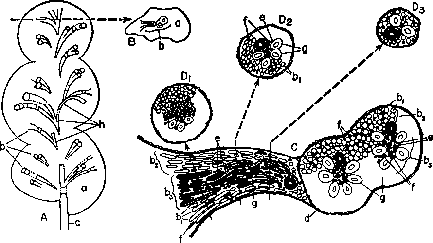 Figure 2 From Urinary Concentrating Processes In Vertebrates