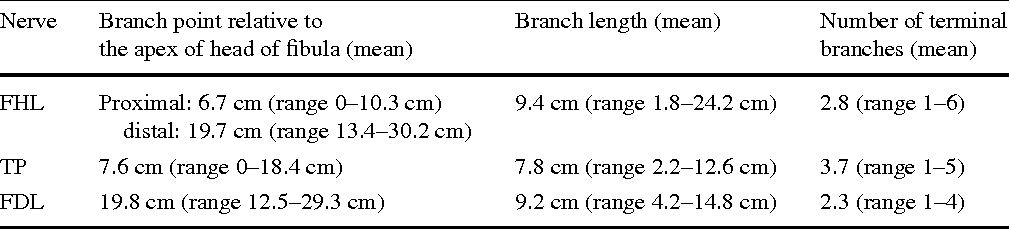 Table 1 Features of the motor branches of the tibial nerve in the deep posterior compartment of the leg