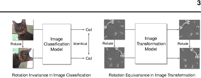 Figure 1 for Augmented Equivariant Attention Networks for Electron Microscopy Image Super-Resolution