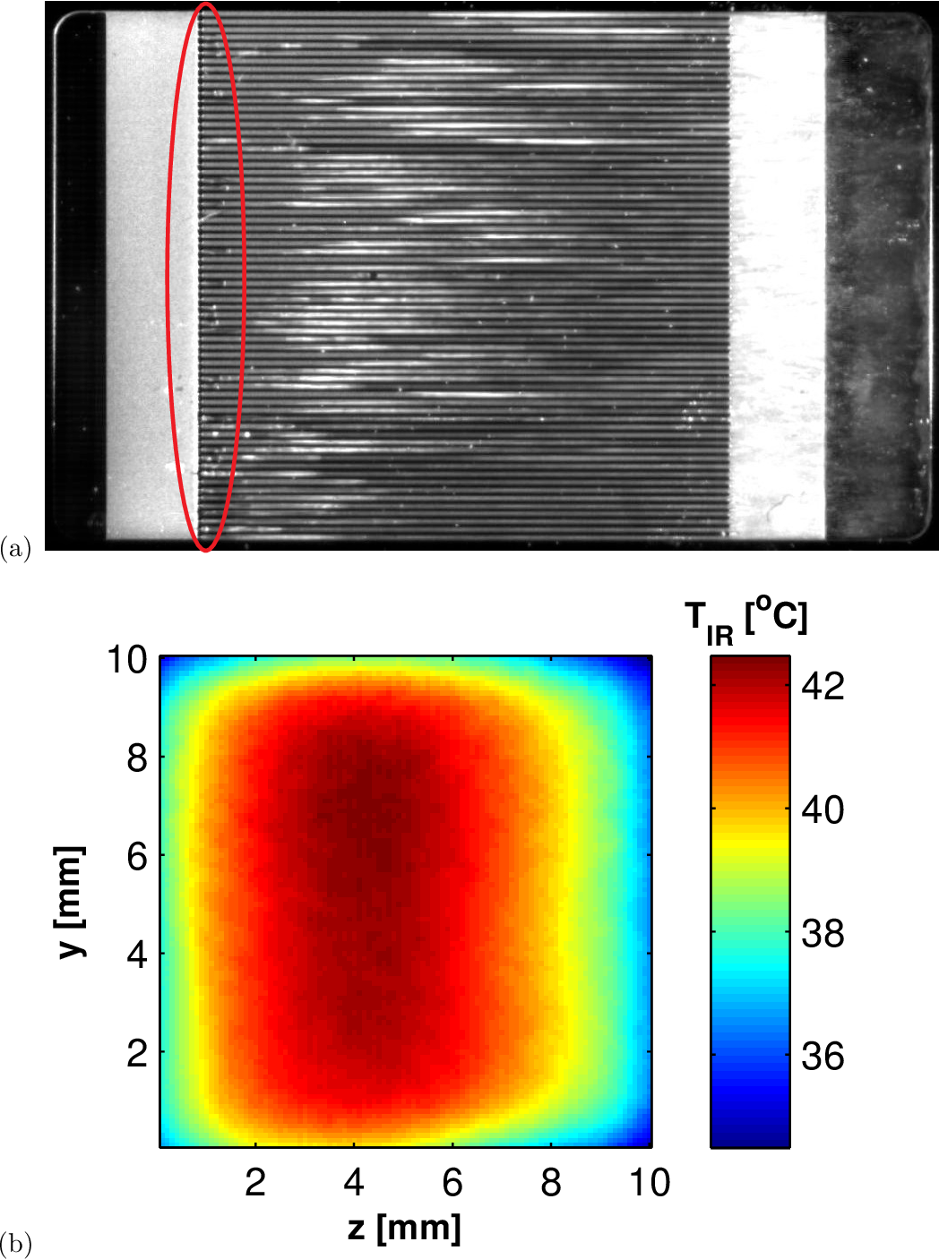 Figure 5.7: Some vapor bubbles flashed at the channel inlet for R236fa flowing in ein,rest=4, Gch=896 kgm−2 s−1, qb=20.7Wcm−2: (a) snapshot from the high-speed video of the twophase flow, and (b) corresponding thermal map.