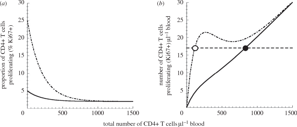 Figure 3. Higher proliferation leads to fewer remaining uninfected CD4þ T cells. (a) The relationship between the total number of uninfected CD4þ T cells and the proportion of these cells that are proliferating. Curves for pathogenic infection (peak proliferation 25%) are shown as dashed-dotted lines, and those for non-pathogenic infection (peak proliferation 5%) are shown as solid lines. (b) The relationship between the total number of uninfected CD4þ T cells and the number of proliferating CD4þ T cells (i.e. obtained from the curve in (a) by multiplying the proportion of proliferating cells by the number of uninfected cells). The equilibrium number of proliferating (i.e. susceptible) uninfected cells is 17 cells ml21 of blood. This level is reached when the total pool (proliferating and non-proliferating) of uninfected CD4þ T cells is 847 cells ml21 of blood for non-pathogenic infection, as shown by the solid line (with 2.0% proliferating), and 117 cells ml21 of blood for pathogenic infections, as shown by the dashed-dotted lines (with 14.8% proliferating). Equilibrium is shown as dashed line.